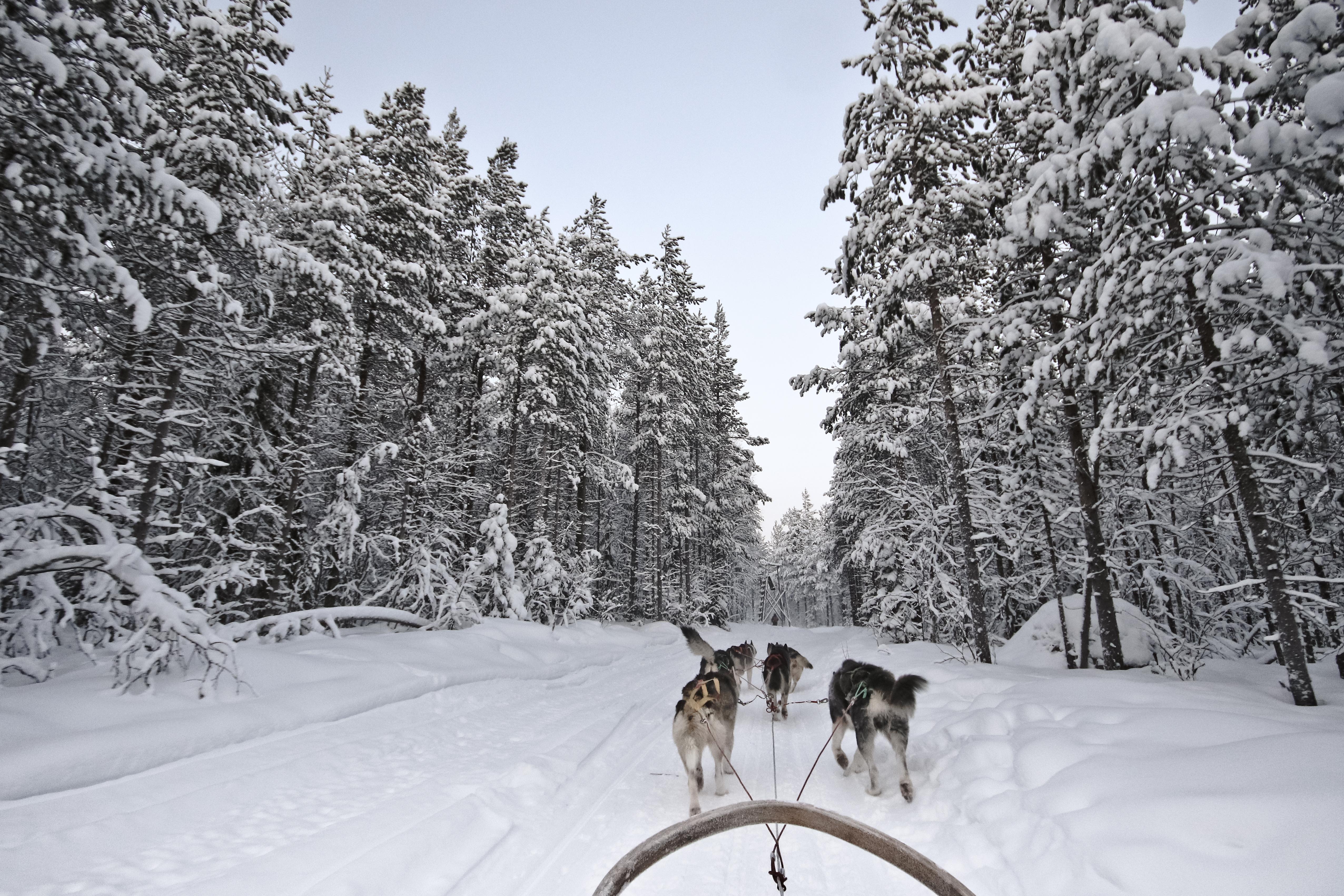 Paseo en trineo con huskys
