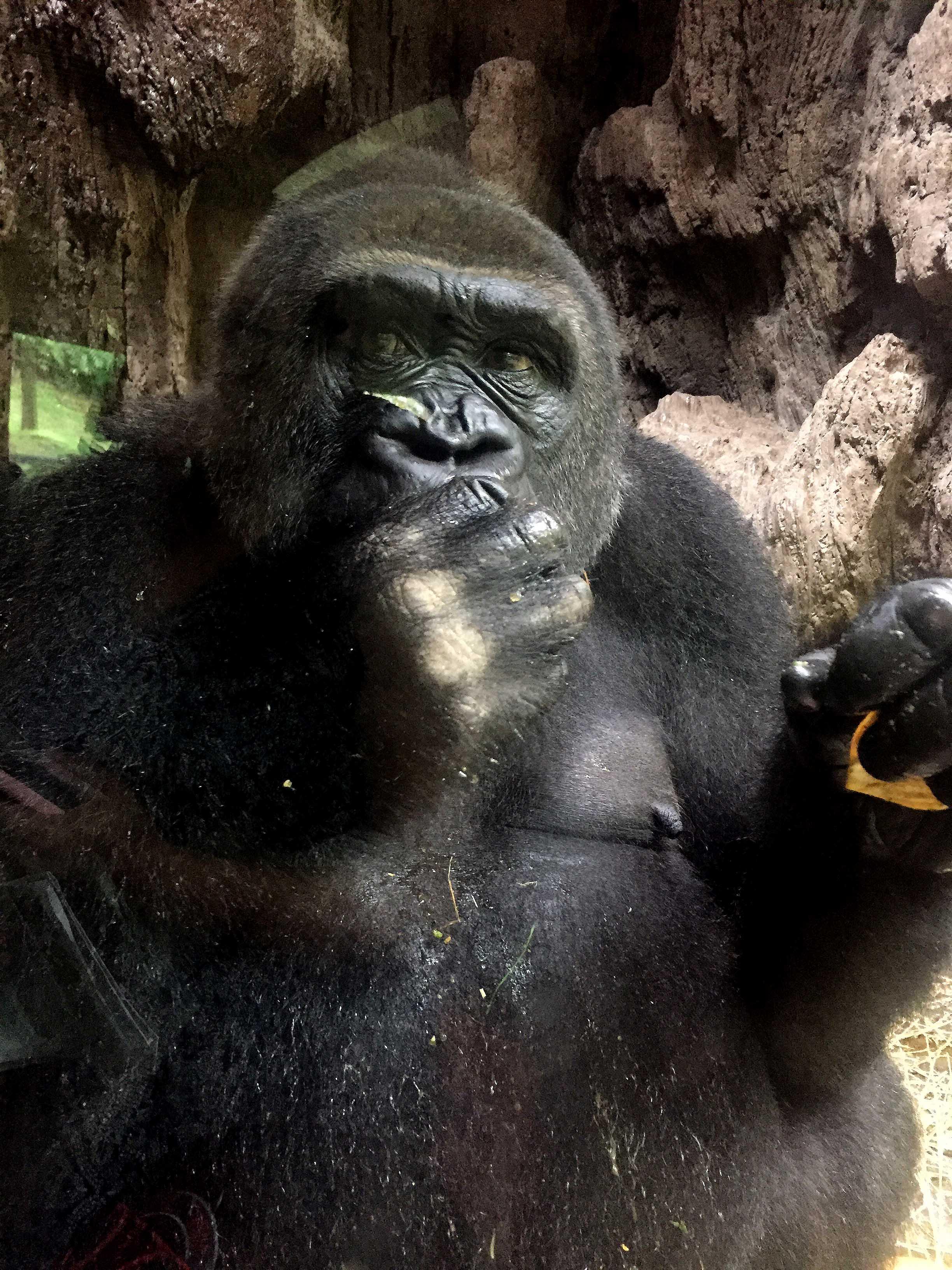 Zoológico en el Bronx